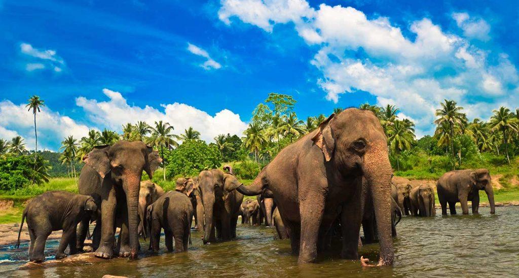 luxury trravel pr agency - sri lanka tourism